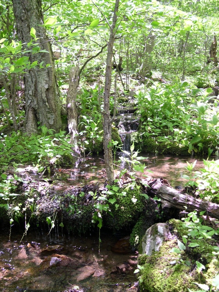 Gentle forest stream